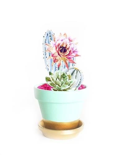 Cactus rebonitos